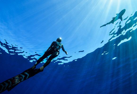 「素潜りで水中にいることは、人間的エゴから解放されるということでもあると思います」